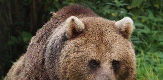 Bear | Safety | cool Slovakia